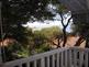 Apartmani Pine Trees