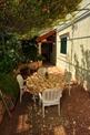 Apartmani Villa Camellia